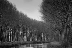 Round the bend (paul indigo) Tags: travel trees reflection monochrome reeds landscape canal belgium damme paulindigo