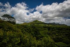 The Verdant Green Splendor of Tropical Kauai (Fort Photo) Tags: kauai hawaii island tropics tropical vacation travel scenic rainforest forest lush green summer vegetation flora clouds cloudscape landscape trees wailuariverstatepark wailua nature michaelmenefee menefee nikon d500
