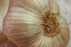 Garlic and Salt (ertolima) Tags: macromondays food filltheframewithfood hmm garlic salt allium bulb