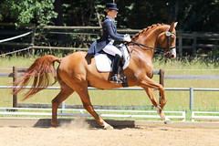 IMG_4665 (dreiwn) Tags: horse pony horseshow pferde pferd equestrian horseback reiten horseriding dressage reitturnier dressur reitsport dressyr dressuur ridingclub ridingarena pferdesport reitplatz reitverein dressurreiten dressurpferd dressurprfung tamronsp70200f28divcusd jugentturnier