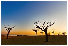 controluce in spiaggia copia (Giorgio Serodine) Tags: alberi canon tramonto mare colore cielo calma controluce sabbia orizzonte allaperto disera