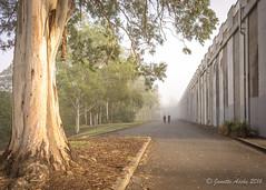 Walking past the reservoir (NettyA) Tags: 2016 australia brisbane chapelhill qld queensland sonya7r atmospheric fog mist shadows tree greenhillreservoir people walking path eucalyptus coth coth5