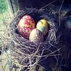 Painted eggs (katieBmorgan) Tags: katiemorgan paintedeggs