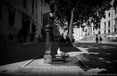 Venice - pretty warm (Damen Fotografie) Tags: street venice shadow bw italy bird water blackwhite warm sony e streetphoto cz reportage carlzeiss emount sonya7ii alpha7ii sonyalpha7ii batis225