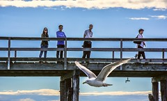 'Watch the birdie' (Images by Christie  Happy Clicks for 2016!) Tags: seagull pier boardwalk beach people nikon d5200 sky clouds