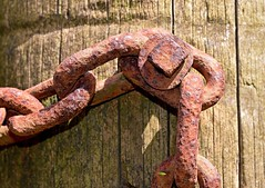 Gatepost and a Greenfly (rustyruth1959) Tags: macro texture wood brown rusty insect greenfly fastener rust metal chain gate gatepost outdoor nikkor nikond3200 nikon link grain