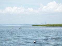 5 River Delta Alabama (110) (Stonehenge 68) Tags: 5riversdelta mobile delta wildlife alligator duck pelican water waterhyacinth hemlock snowyegret alabama