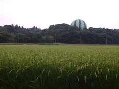Crops (bonjour_de_y5i) Tags: rice ricestalk oryzasativa grove powerpole
