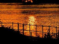 Happy Fence Friday (BrigitteE1) Tags: happyfencefriday fence sunset river water reflection hff bremen deutschland germany europe wasser flus sonnenuntergang zaun friday freitag reflexion europa