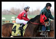 IMG_9602 (femalejockeys) Tags: femalejockeys turfway park female athletes horse racing horses thoroughbred kentucky derby