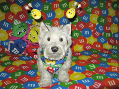 """8/12A ~ """"Riley in Color"""" (ellenc995) Tags: riley westhighlandwhiteterrier 12monthsfordogs16 theme mm colorful thesunshinegroup coth fantasticnature alittlebeauty abigfave coth5 challengeclub supershot pet100 pet500 rubyphotographer ruby3 akob pet1000 pet1500"""