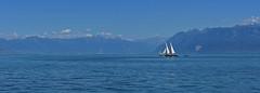 Au large de Morges (Diegojack) Tags: nikon nikonpassion d7200 bateaux léman morges barque latine vaudoise voiles voiliers panorama fabuleuse