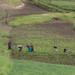 Agricultura quase sem máquinas