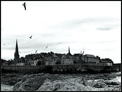 """Saint-Malo"" (Corinne DEFER - DoubleCo) Tags: travel sea blackandwhite bw mer france bird blancoynegro nature landscapes brittany noiretblanc bretagne nb ciel nuage nuages paysage paesaggi oiseau paysages saintmalo mouette rochers paisagens landschaften  ileetvilaine corinnedefer updatecollection ucreleased"