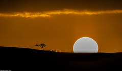 The sun's comin' over the hill. (AlbOst) Tags: trees orange sun sunrise skies silhouettes fences contrejour intothelight laquintaessenza