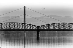 Lines of a Bridge (ch.weidinger) Tags: bridge sky blackandwhite bw reflection bird lines himmel sw schwarzweiss brcke reflexion vogel eisenbahnbrcke railbridge linien