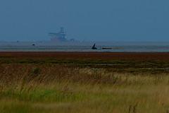 Far away, below the horizon line (pierre_et_nelly) Tags: river ship horizon estuary hull humber riverhumber humberestuary