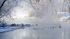 Freezing Fog (ratulm) Tags: morning trees sun mist snow ice fog river ducks dupage warrenville