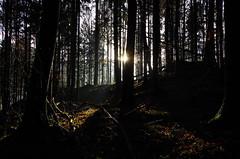 Sonnenstrahlen (Aah-Yeah) Tags: light sun mist tree fog forest bayern licht nebel sonne wald sunbeam sonnenstrahlen achental chiemgau lichtblick