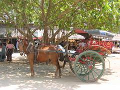 Our Transport Across Bagan