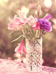 Keeping Hopes Alive (Sarah-BK) Tags: pink flowers glass beauty purple bokeh hopes vase alive delicate keeping