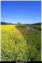 Maaseudulla on elm (kuvatoimisto.rodeo) Tags: finland helsinki maisema kes sato vilja lato maaseutu pelto maatalous vuodenaika sadonkorjuu luomu maalaismaisema maanviljely thk maanviljelys ulkokuva viljapelto poutapilvi viljely hytykasvi elinkeino leipvilja maaseutumaisema maataloustuotanto maatilatalous 9maaseutu turkusalo