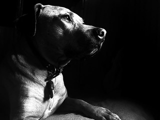 Sun dog 101