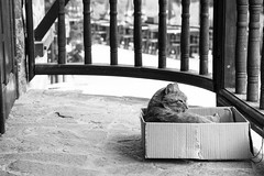 CREATURES - BULGARIA - Rila Monastery - Cat in Box (T R A V E L D O C U M E N T A R Y) Tags: street travel cats animals kitten sofia naturallight mosque bulgaria stray boxes journalism plovdic
