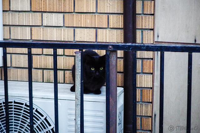 Today's Cat@2015-02-27