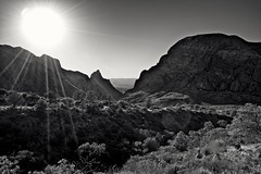The Sun Shines from Above (Big Bend National Park) (thor_mark ) Tags: trees sun mountains nature blackwhite texas unitedstates blueskies portfolio day3 bigbendnationalpark desertlandscape lookingwest burromesa thewindow chihuahuandesert chisosmountains project365 colorefexpro apertureedited windowviewtrail mountainsindistance carterpeak vernonbaileypeak silverefexpro2 usbiospherereserve nikond800e triptobigbendguadalupemountainsnationalparks