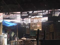 Yogya Bird Market