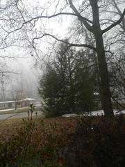 Snow and Ice Feb Mar 2015 7 Day 4 Melting Fog Rain (whitebuffalobk) Tags: snow ice rain fog melting tracks missouri capegirardeau 2015