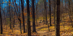 Into the woods..... (sgshutter) Tags: trees fall nature colors landscape woods oakmountainstatepark