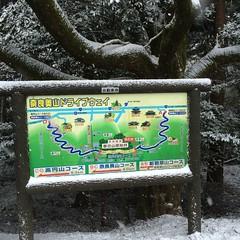 Gaijin Life February 2015 (jgochenouer) Tags: travel music snow japan google hula deer sake cello hawaiian osaka izakaya nara gaijin symphony takoyaki shochu ashiya okonomiyaki edtech shika wakakusuyama jgochenouer