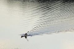 Paddling (iansand) Tags: kayak paddle lanecove lanecoveriverkayakclub
