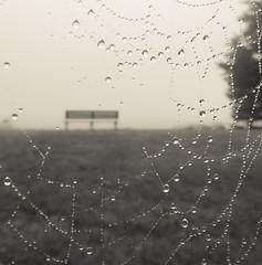 Sitting Beyond A Web (Catskills Photography) Tags: blackandwhite macro water fog bench droplets bokeh web spiderweb odc hbm lonefigure canong15