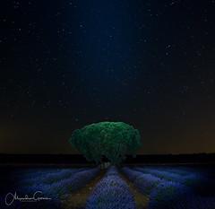 Abduccion (Alejandro Garca Seplveda) Tags: luz arbol noche guadalajara cielo estrellas lavanda brihuega