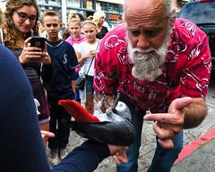 African Grey Parrot (Penseroso) Tags: seattle bird africangreyparrot pikeplacemarket
