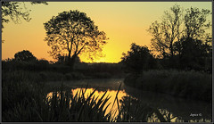 Golden Glow. (Picture post.) Tags: trees green nature water sunrise reflections reeds landscape duck eau paysage arbre
