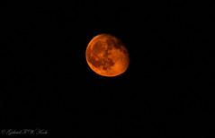Last Night's Orange Moon (Gabriel FW Koch) Tags: moon moonlit orange orb nighttime evening distance canon telephoto sigma eos dof beauty beautiful awesome pretty