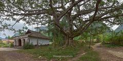K8970-75.1113.Qunh Sn.Bc Sn.Lng Sn. (hoanglongphoto) Tags: asia asian vietnam northvietnam northeastvietnam plant tree outdoor landscape pagoda vietnampagoda canoneos1dsmarkiii zeissdistagont3518ze imagesize1x2 1x2 ngbc lngsn bcsn phongcnh inh nhvitnam thcvt cy cya ngoitri tlkchthcnh1x2 qunhsn