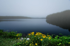 A-Bright-Spot-In-a-Dreary-Morning (desouto) Tags: flowers sky nature water clouds stream stones lakes ponds hdr