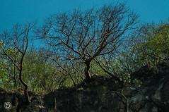 DSC03232 (Braulio Gmez) Tags: barrancadehuentitn biodiversidad caminoamascuala canyon canyonhuentitan faunayflora floresyplantas guadalajara jalisco mountainrange naturaleza sierra senderismo paisaje barrancadehuentitn barranca huentitn ixtlahuacandelro mxico guardianesdelabarranca