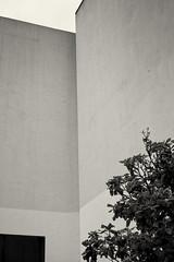 Museo Botero, study 2 (Fujifilm X-E1) (alejandro lifschitz) Tags: light white black art blanco monochrome digital photoshop silver photography colombia bogota shadows interior room negro fine indoor pro fujifilm museo museums alejandro botero lightroom xe1 lifschitz efex