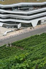 Ackerbau und Architektur, wie mit dem Lineal (springfeld) Tags: tag295 365fotosorg weinbau architektur linien schwarzweisfotografie grn weinhang strase fahrbahnmarkierung