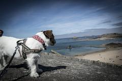 Saint Malo (Naiade Photography) Tags: 2016 estate francia pinkladiesintour stagioni summer france saintmalo bretagna britanny ocean oceano rizzo jackrussell terrier jrt dog