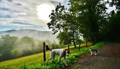 ~~A deux sur le chemin...~~ (Jolisa) Tags: hlna charlotte deux two chien chat chemin soir evening ciel sky aot2015 brume mist paysage glay 25