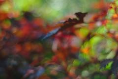 DSC_0008 (criscrot) Tags: parcsaintemarie nancy lorraine bokeh colors d200 50mm18 automne autumn couleurs