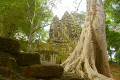 North Gate Interior with Tree (Neil Noland) Tags: cambodia siemreap angkor angkorthom gate ruin