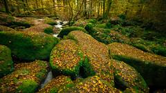 [297] Rocks... (waterman75) Tags: mossy moss rocks stone stones forest tree trees water woods bavaria germany regensburg